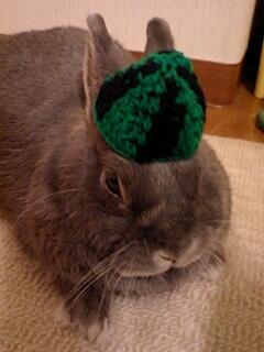 スイカ帽子で残暑お見舞い申し上げます♪