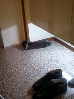我が家の番犬(兎!)
