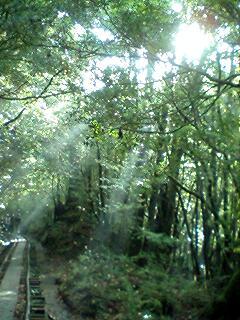 縄文杉は遠かった…