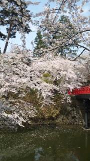 今日は弘前公園