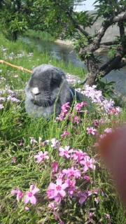 渋田川の芝桜などなど(≧∇≦)