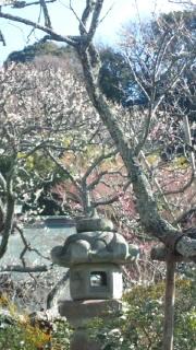 鎌倉 天園ハイキングコース